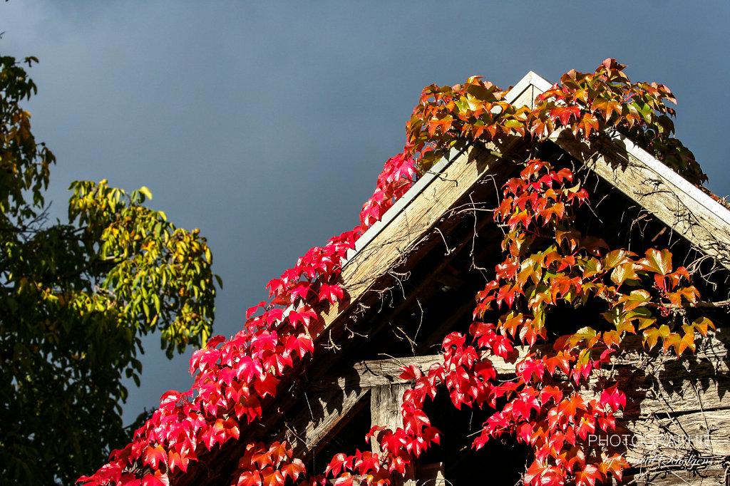 Gefärbter Herbst / coloured autumn