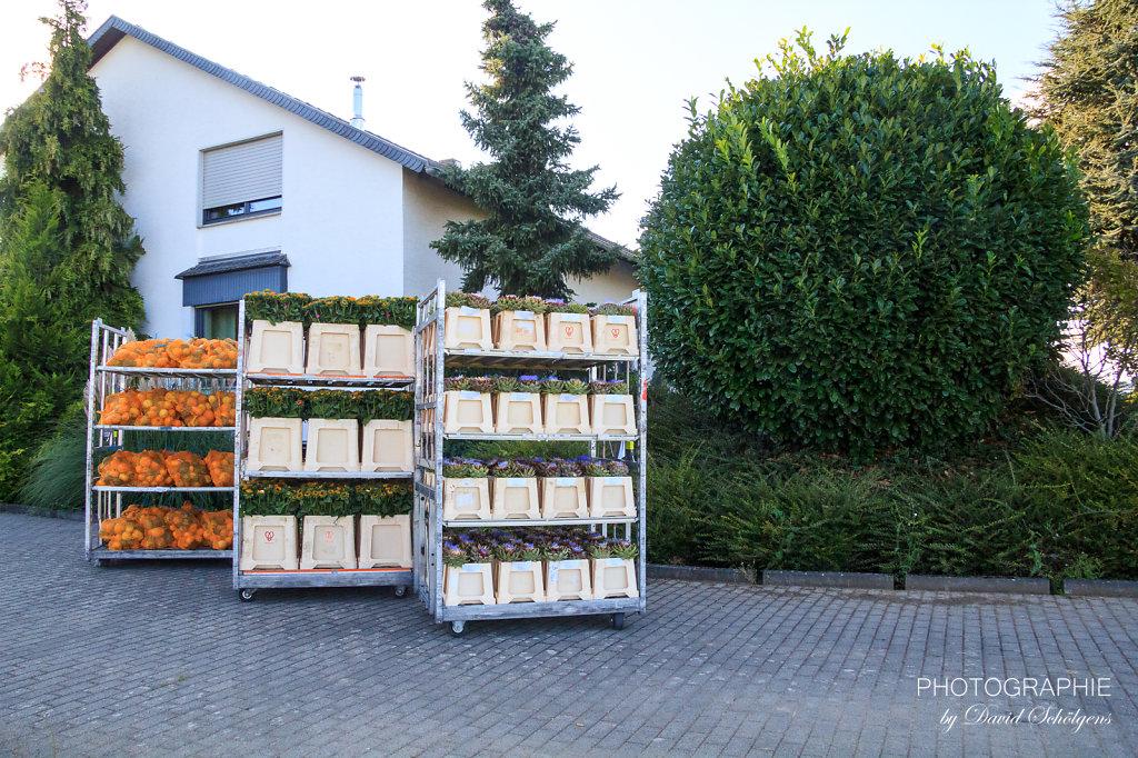 2015-09-10Pinsdorf-PhotographieDS-0002.jpg