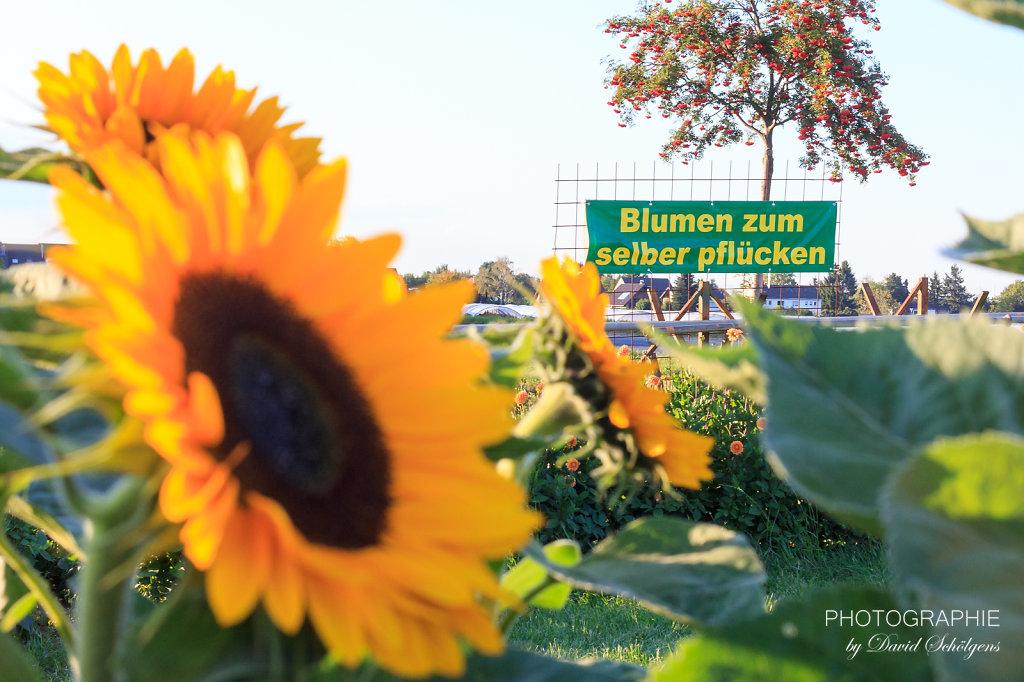 2015-09-10Pinsdorf-PhotographieDS-0073.jpg