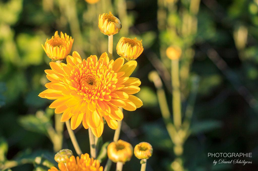 2015-09-10Pinsdorf-PhotographieDS-0095.jpg